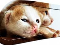 0053-Kitten